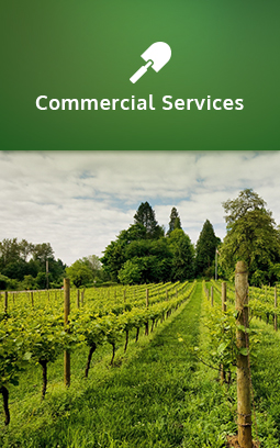 A vineyard with lush grounds. Click to learn more about commercial services.